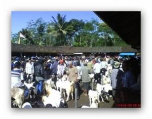 pasar kambing