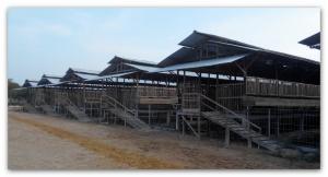 peternakan kambing etawa
